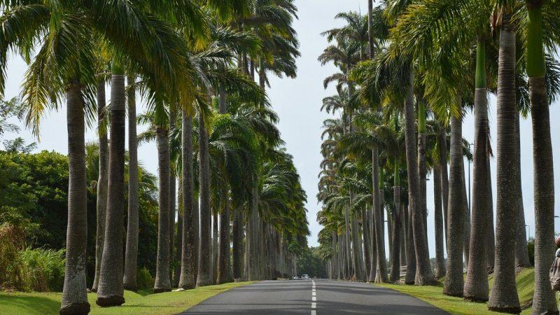 Les activités à pratiquer avec vos enfants en Guadeloupe