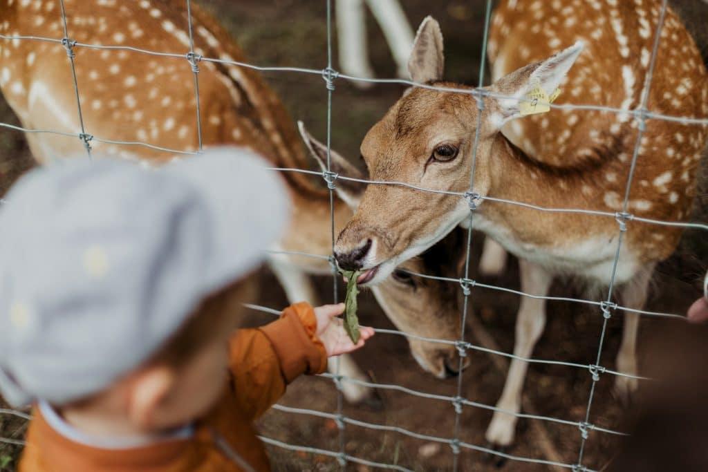 enfant zoo